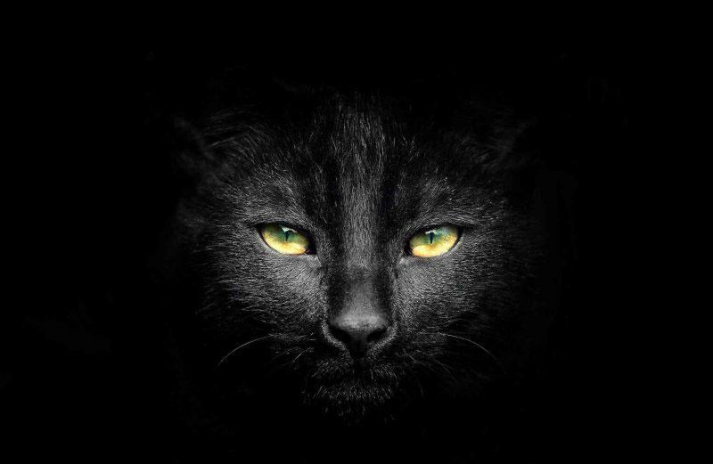 Ảnh mèo đen