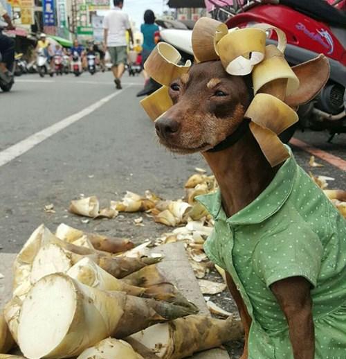 Hình ảnh chó hài hước