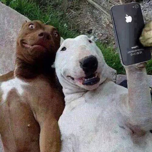 Hình ảnh chó selfie hài hước