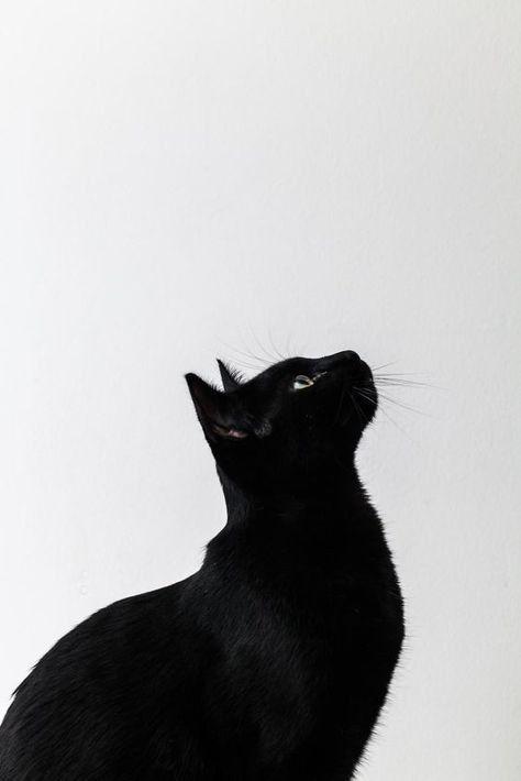 Hình ảnh chú mèo đen