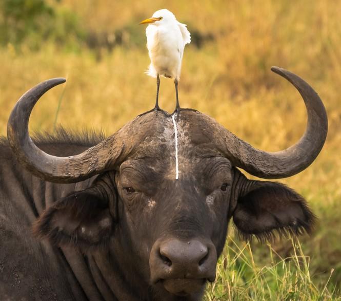 Hình ảnh hài hước trong thế giới động vật