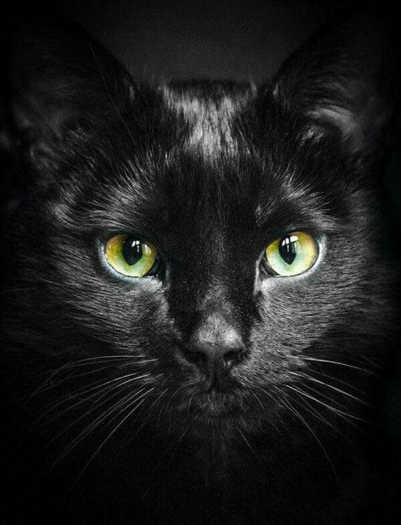Hình ảnh mặt mèo đen