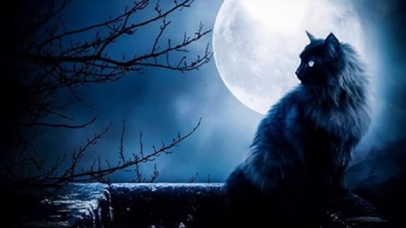 Hình ảnh mèo đen 3D