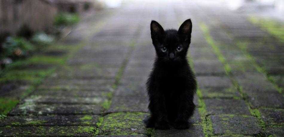 Hình ảnh mèo đen bí ẩn