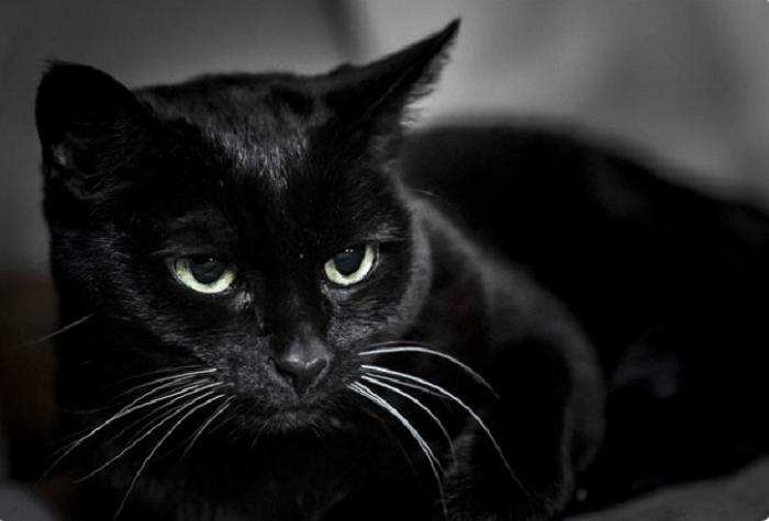 Hình ảnh mèo đen buồn
