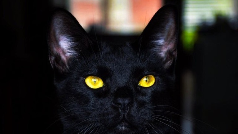Hình ảnh mèo đen mắt vàng