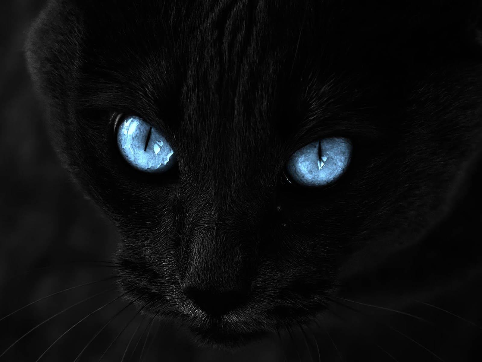 Hình ảnh mèo đen mắt xanh