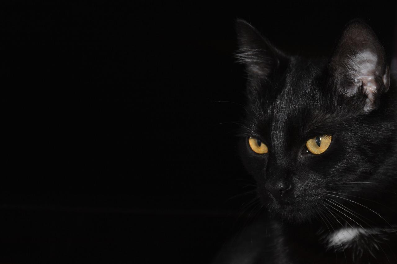 Hình ảnh nền mèo đen