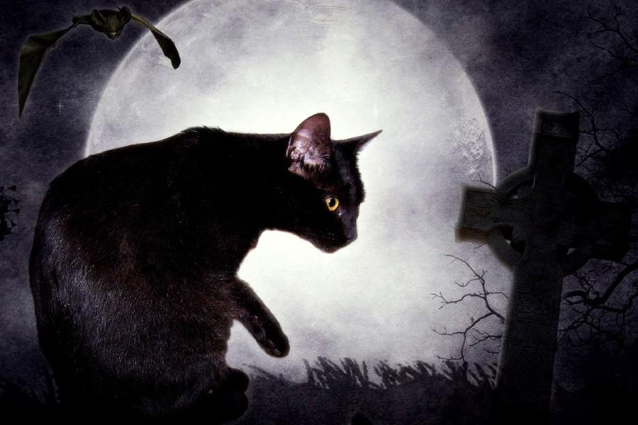 Hình ảnh về con mèo đen
