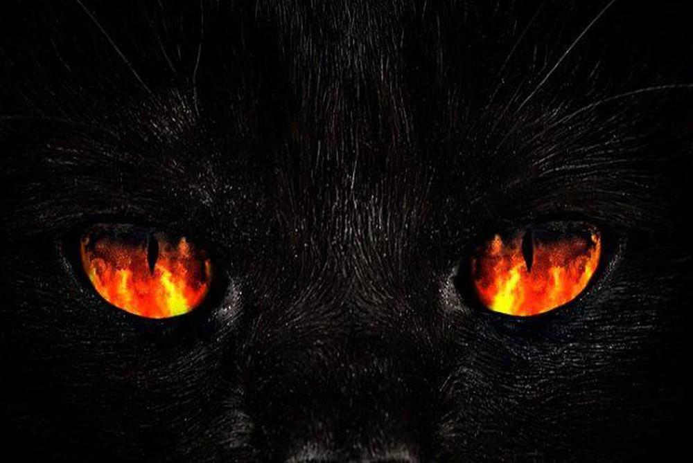 Hình ảnh về mèo đen