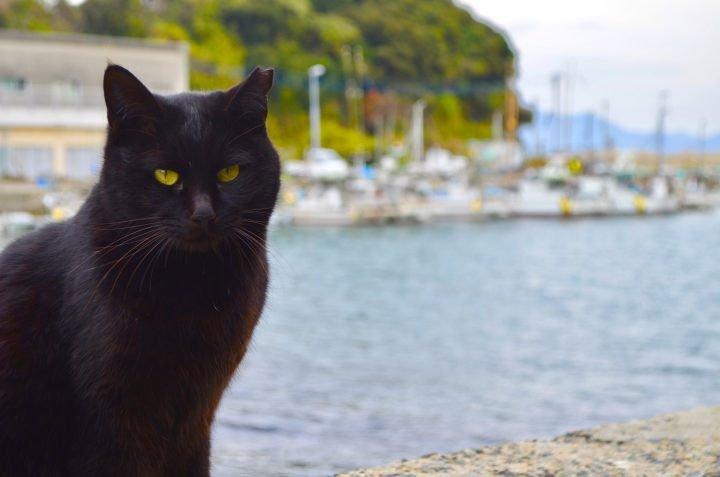 Hình mèo đen