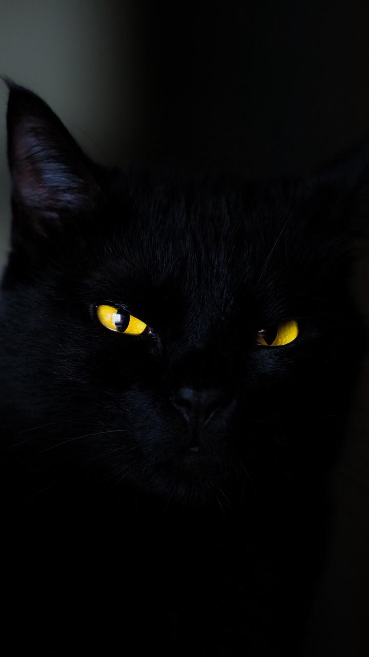 Hình nền điện thoại mèo đen