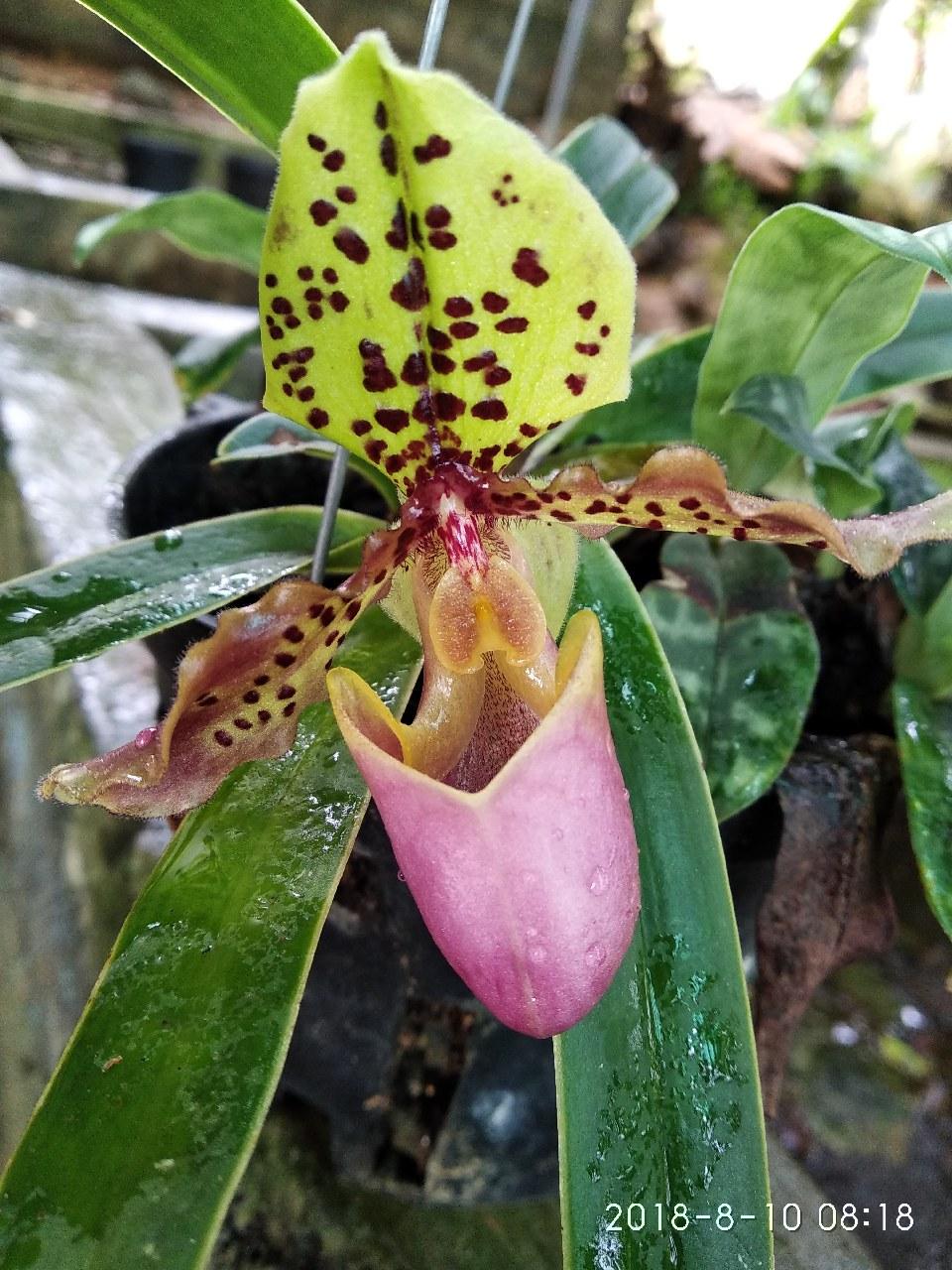 Bông hoa lan rừng đẹp