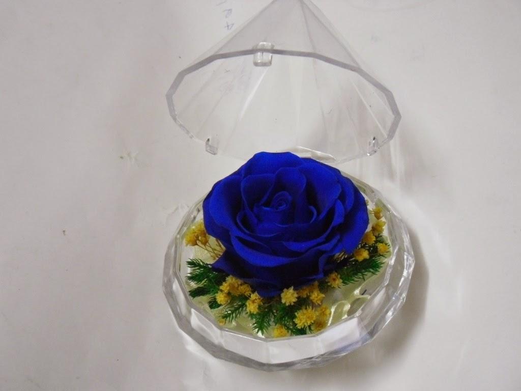 Bông hồng xanh đẹp
