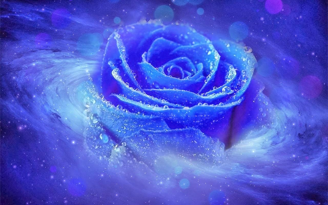 Bông hồng xanh vũ trụ