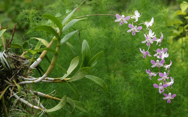 Cành hoa lan rừng tím đẹp