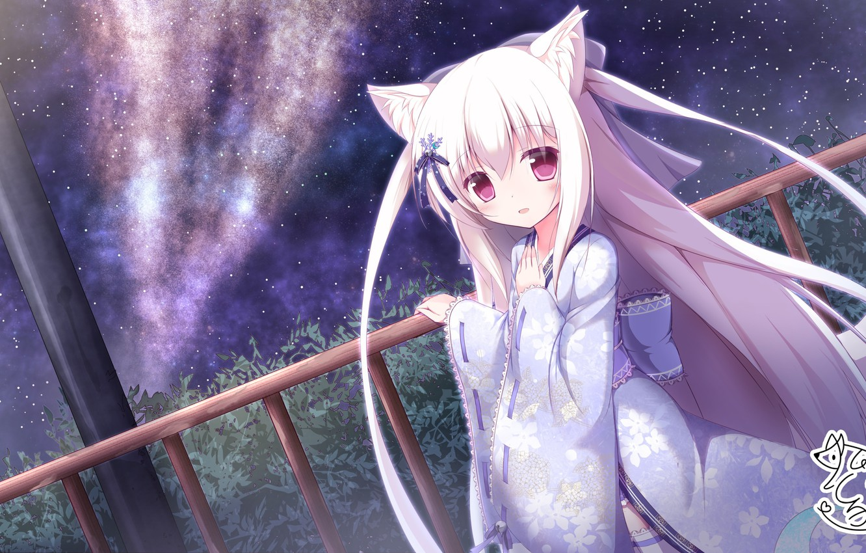 Hinh ảnh cô gái mèo tóc trắng xinh đẹp