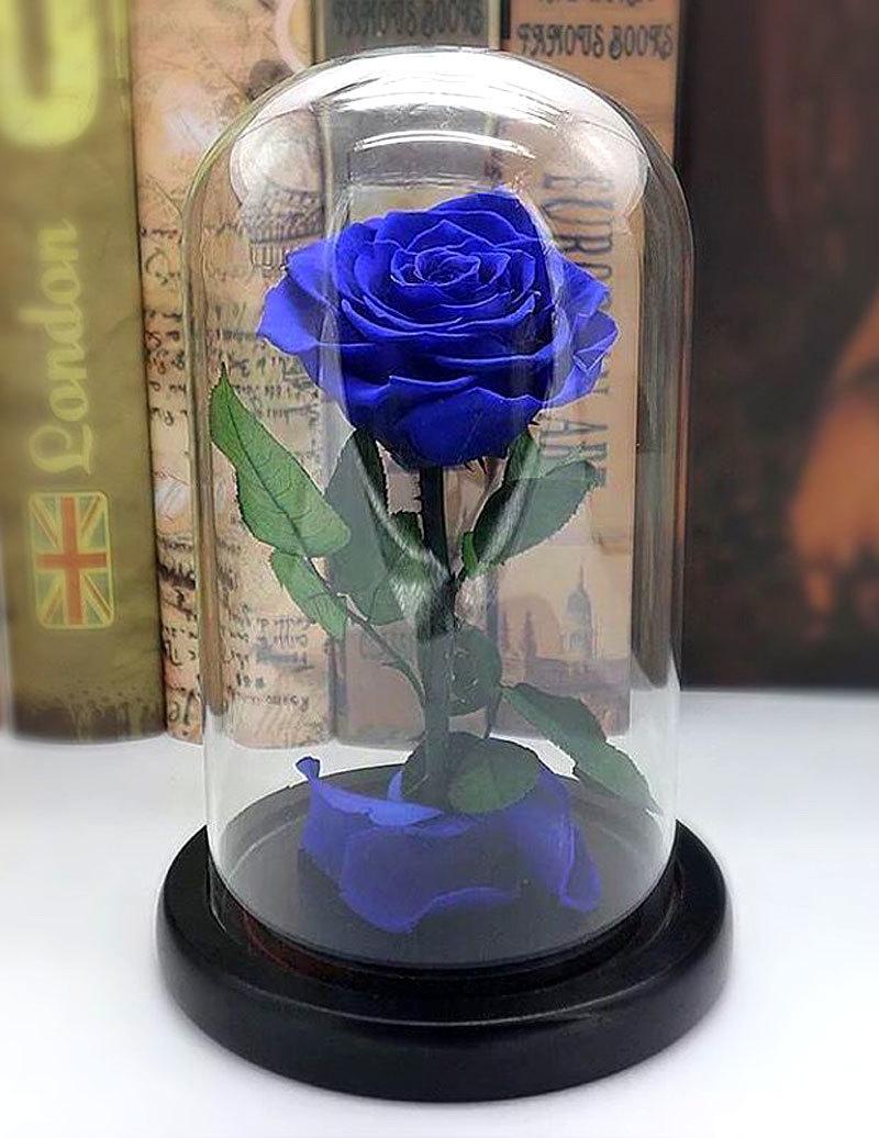 Hình ảnh lồng kính chứa hoa hồng xanh
