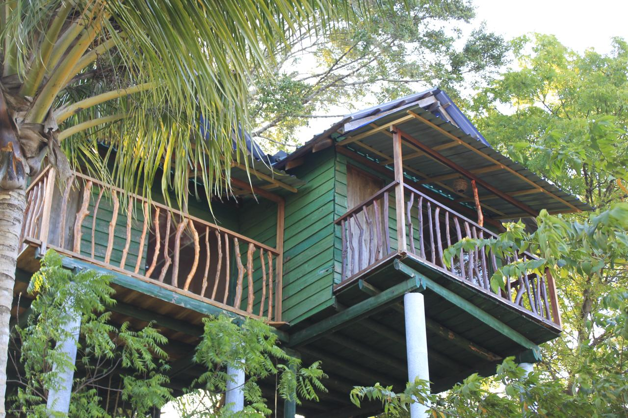 Hình ảnh một ngôi nhà được xây dựng ở trên cây cực đẹp