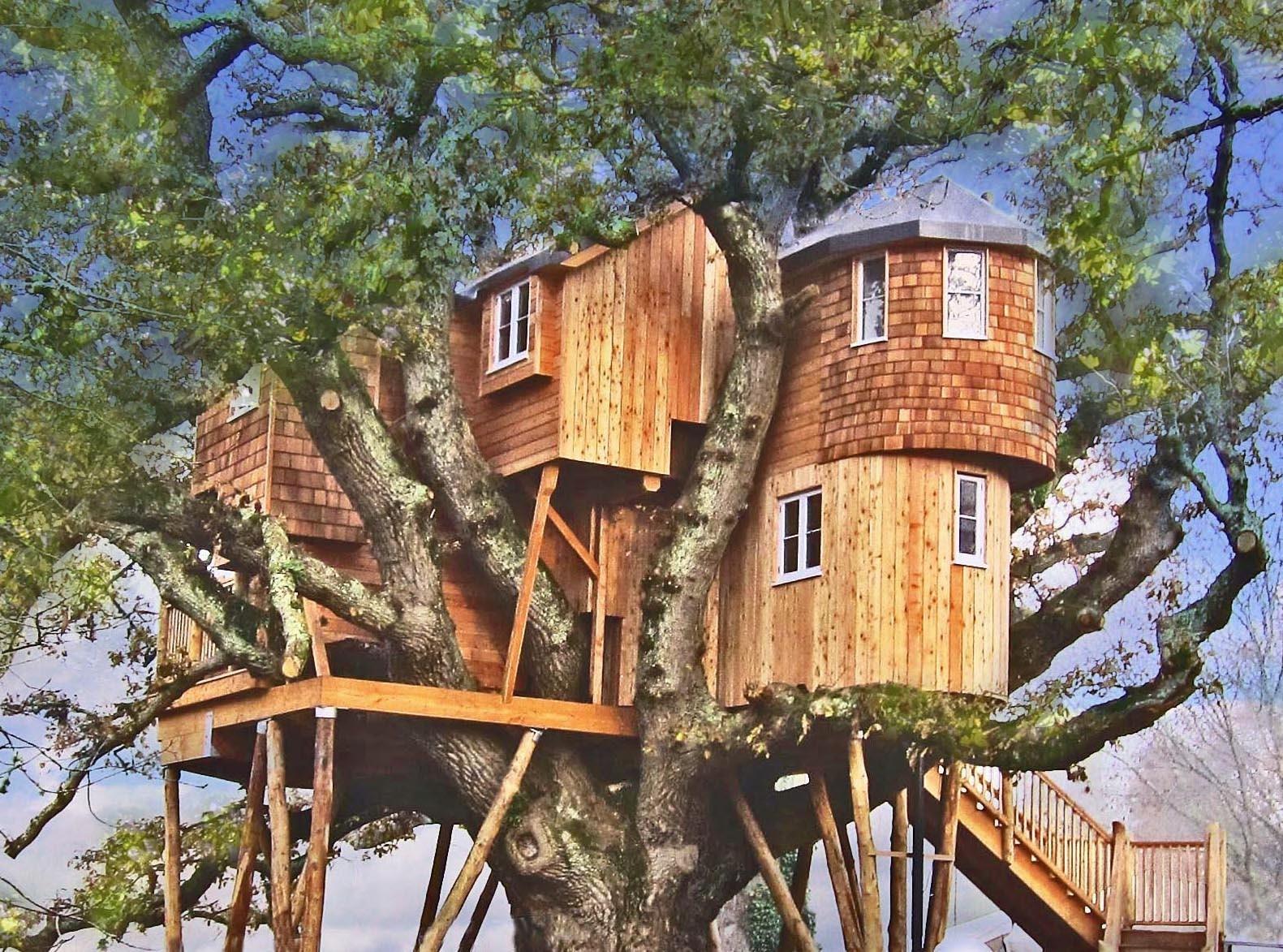 Hình ảnh ngôi nhà đồ sộ to đẹp trên cây