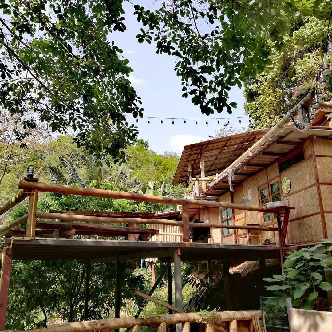 Hình ảnh ngôi nhà gỗ ở trên cây rất đẹp
