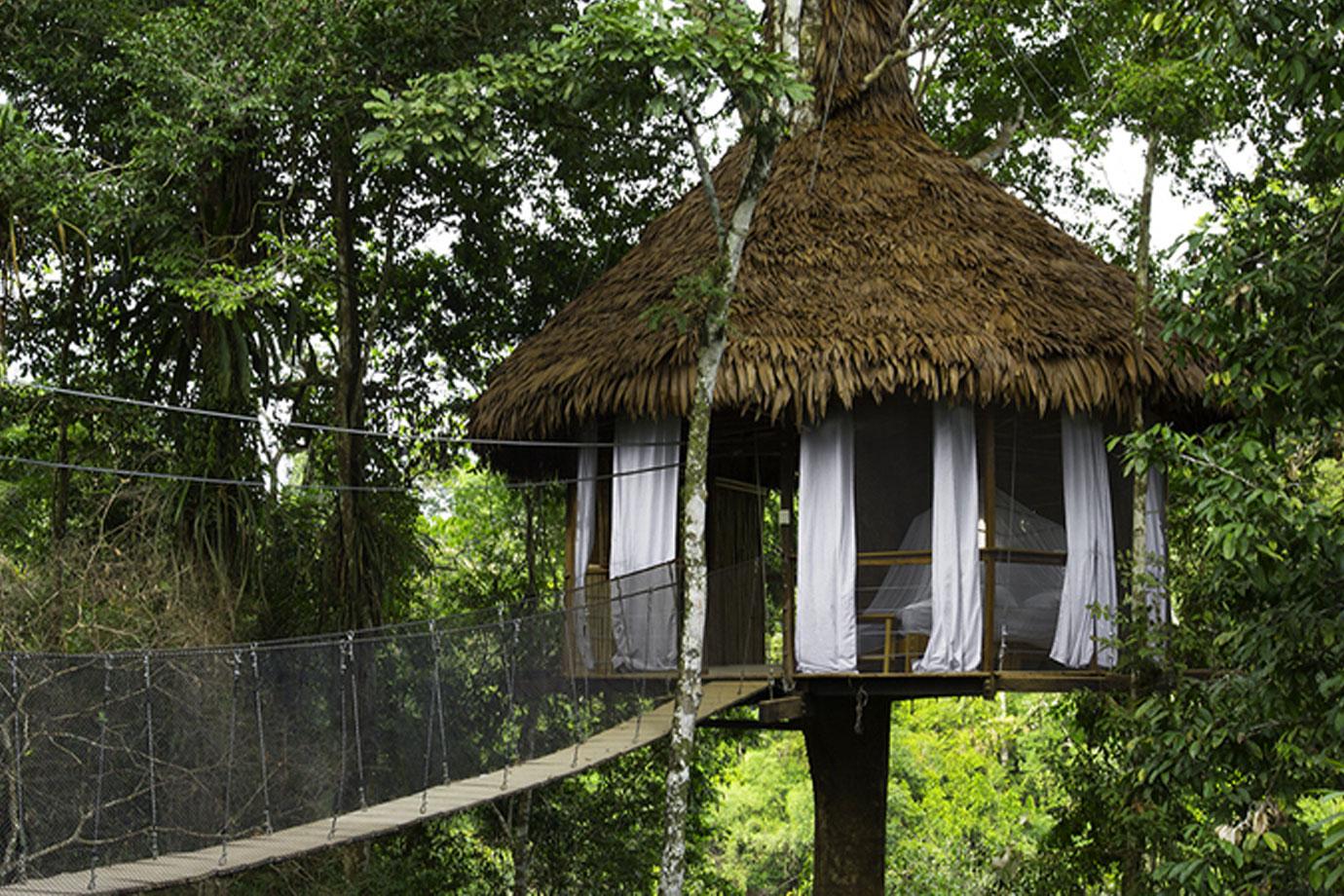 Hình ảnh ngôi nhà trên cây độc lạ
