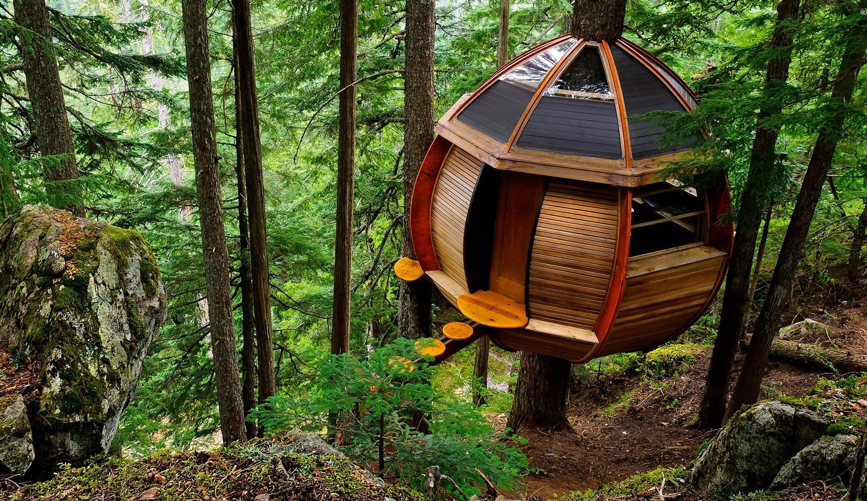 Hình ảnh ngôi nhà tròn ở trên cây