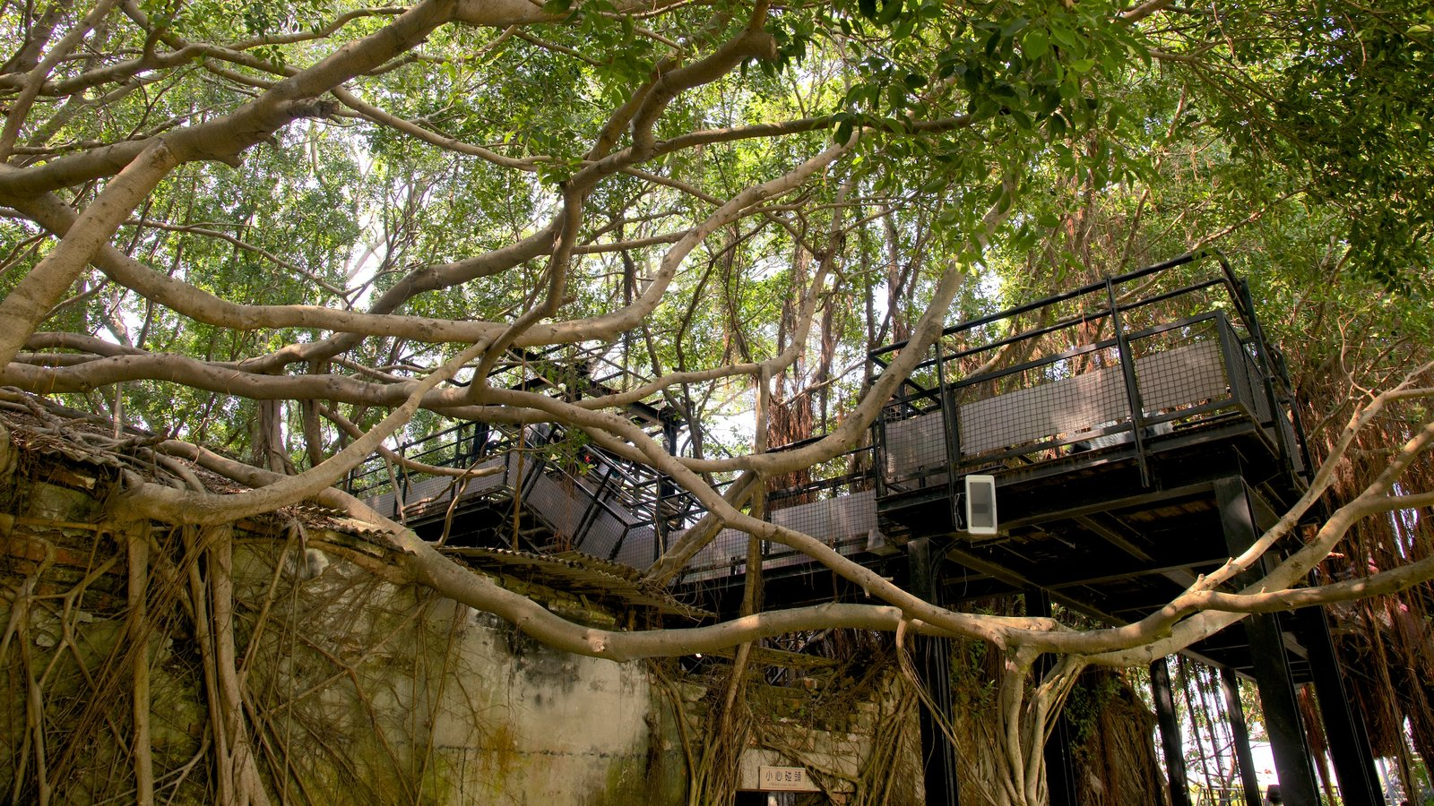 Hình ảnh nhà trên cây giữa những tán lá