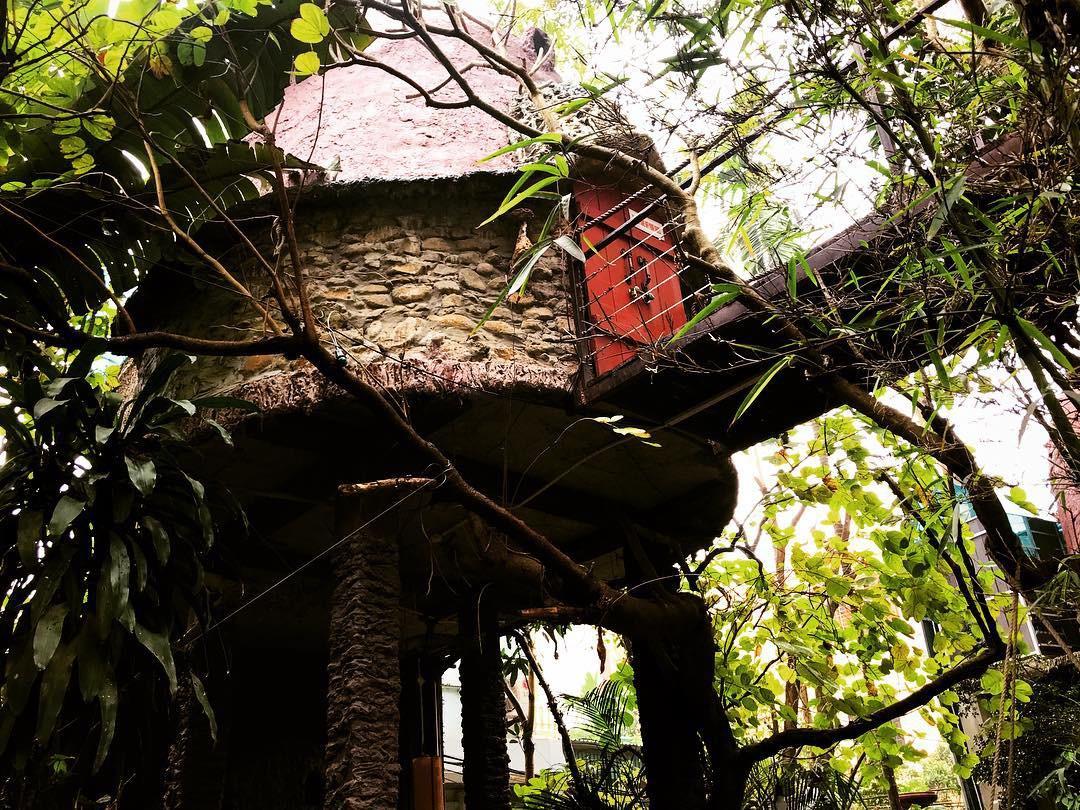 Hình ảnh nhà trên cây rất đẹp mắt