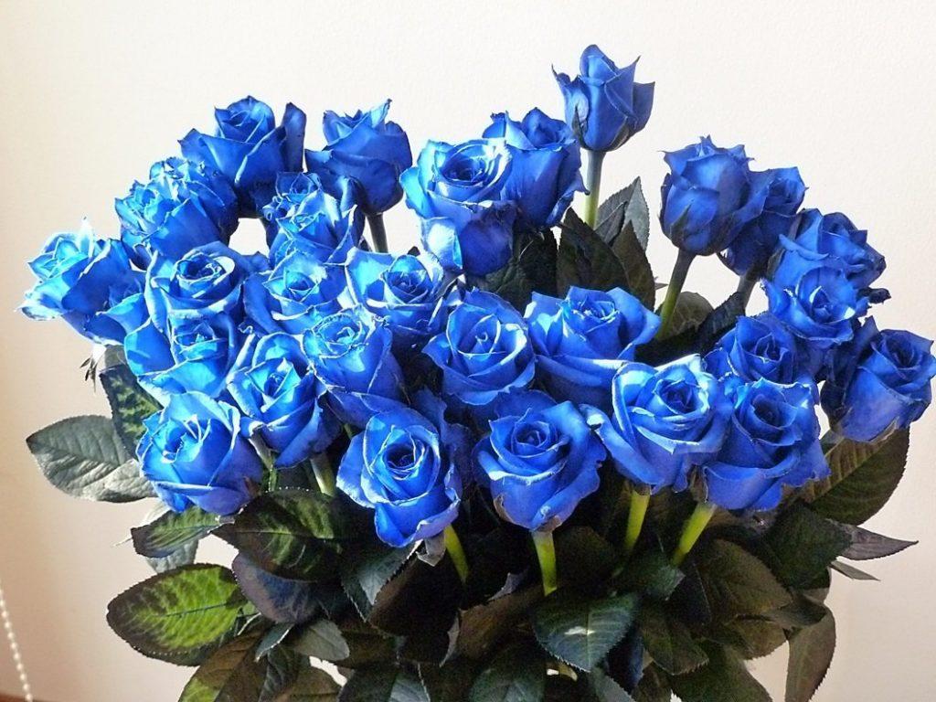 Hình ảnh những bông hoa hồng xanh