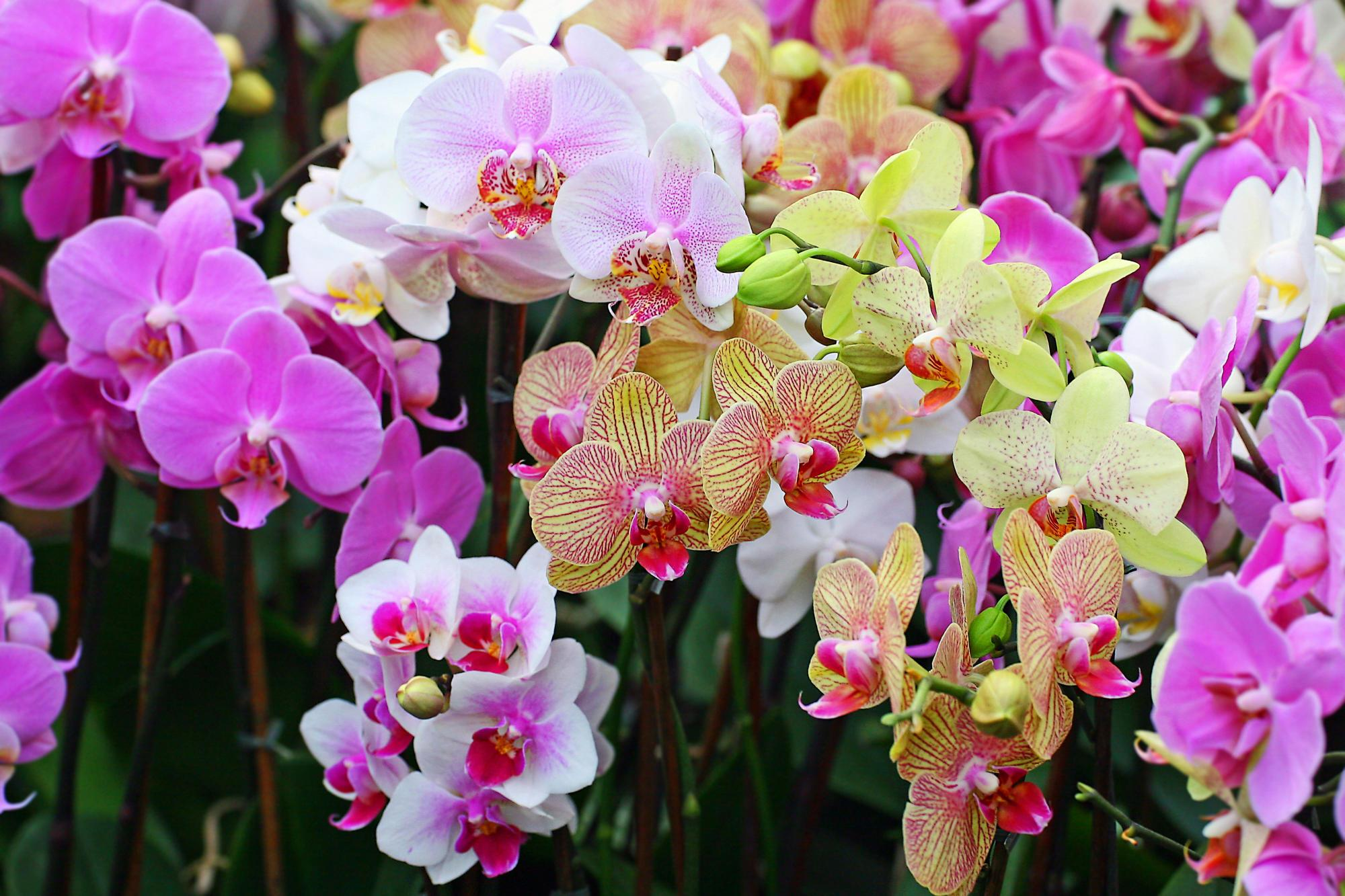 HÌnh ảnh những cành hoa lan rừng rất đẹp