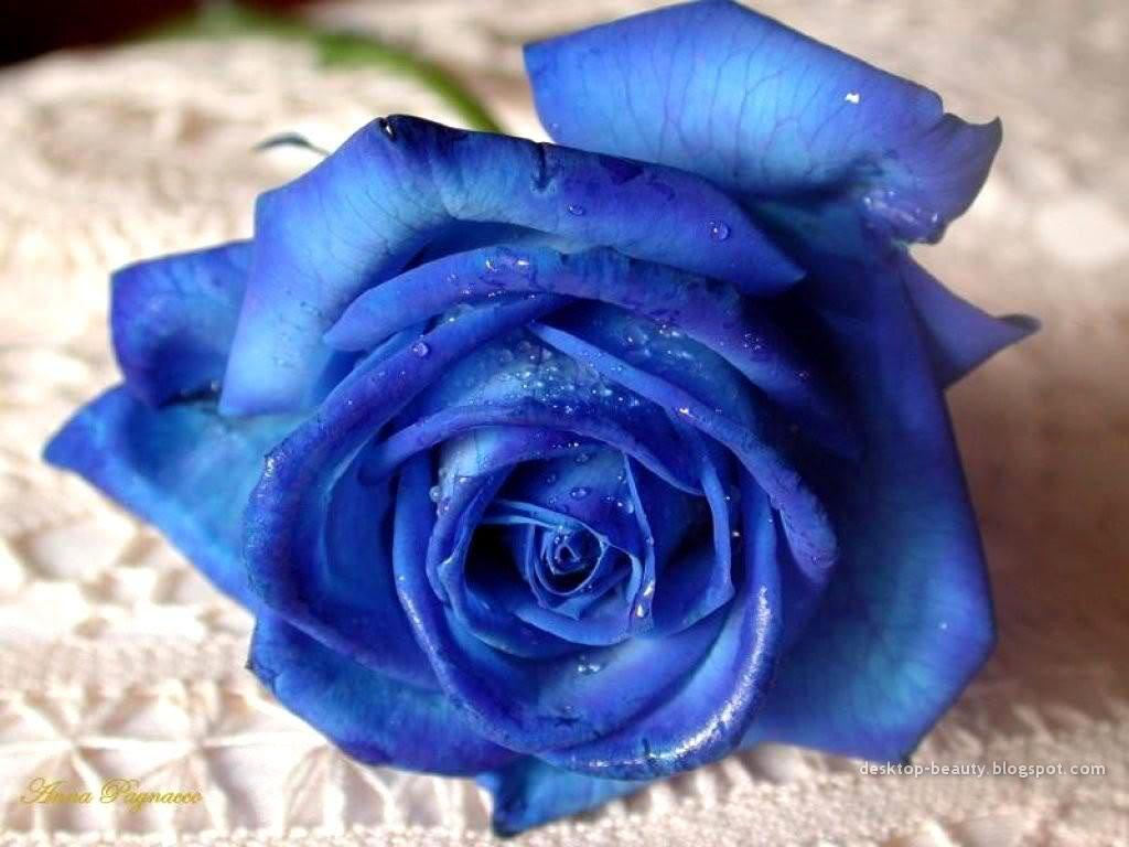 Một bông hồng xanh