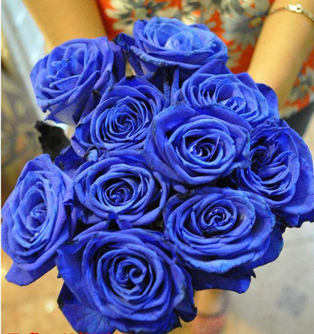 Những bông hoa hồng xanh bó gọn