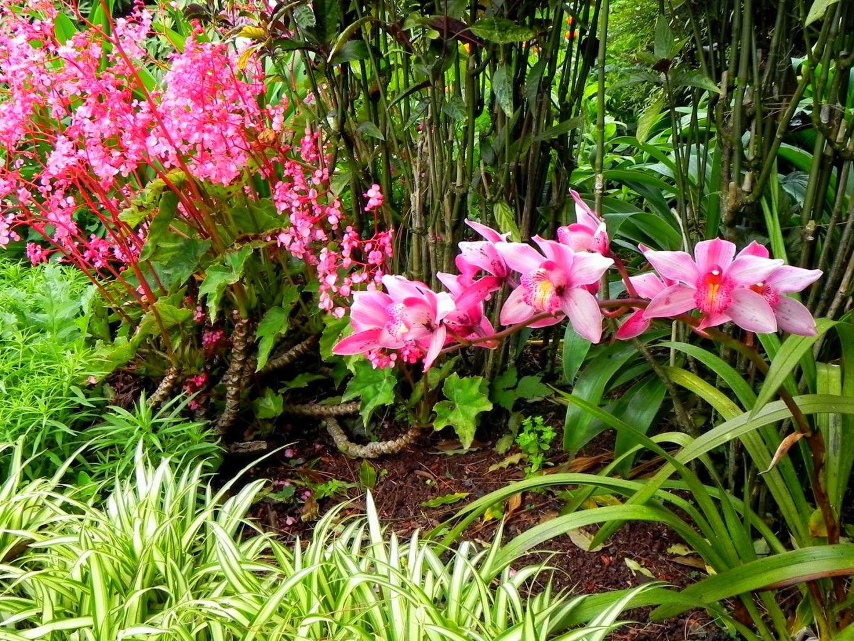 Những bông hoa lan rừng tím nhạt đẹp