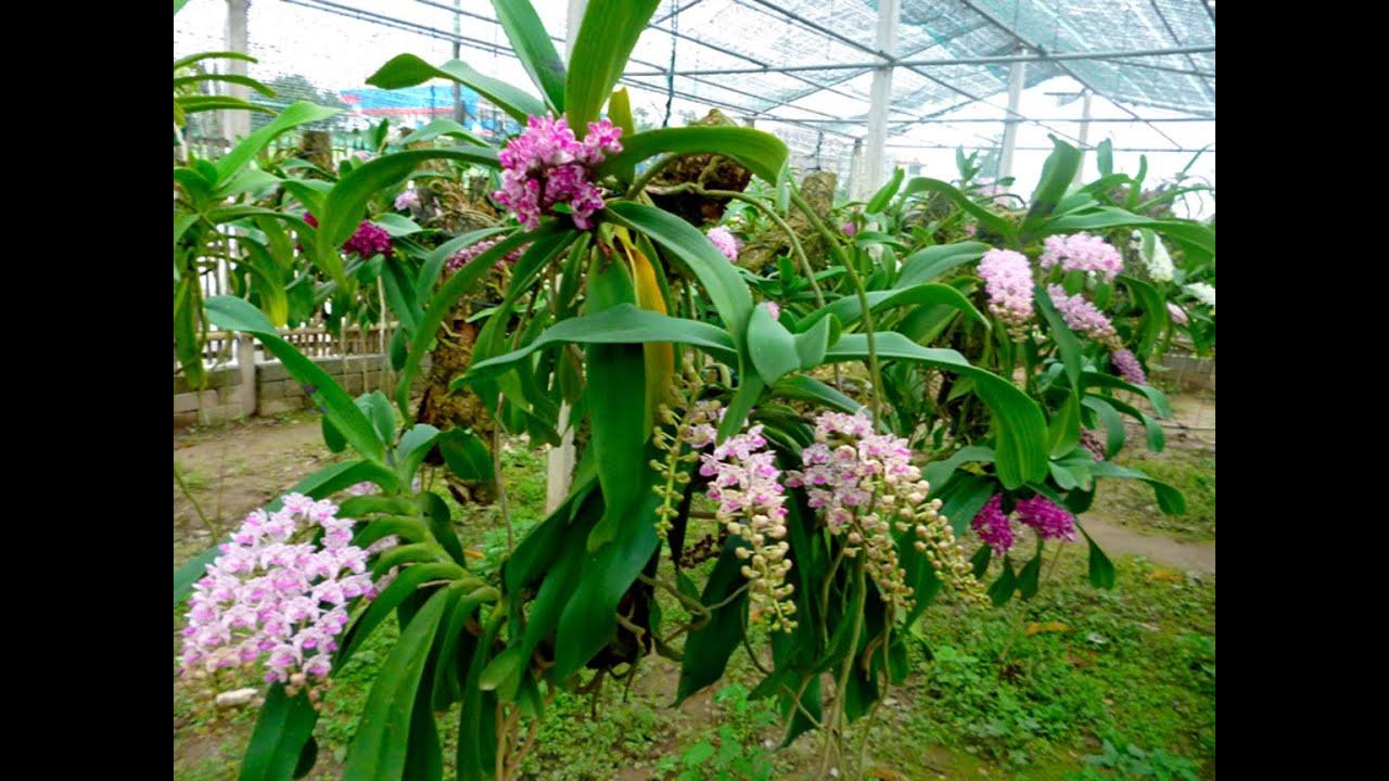 Những chùm hoa lan rừng đẹp