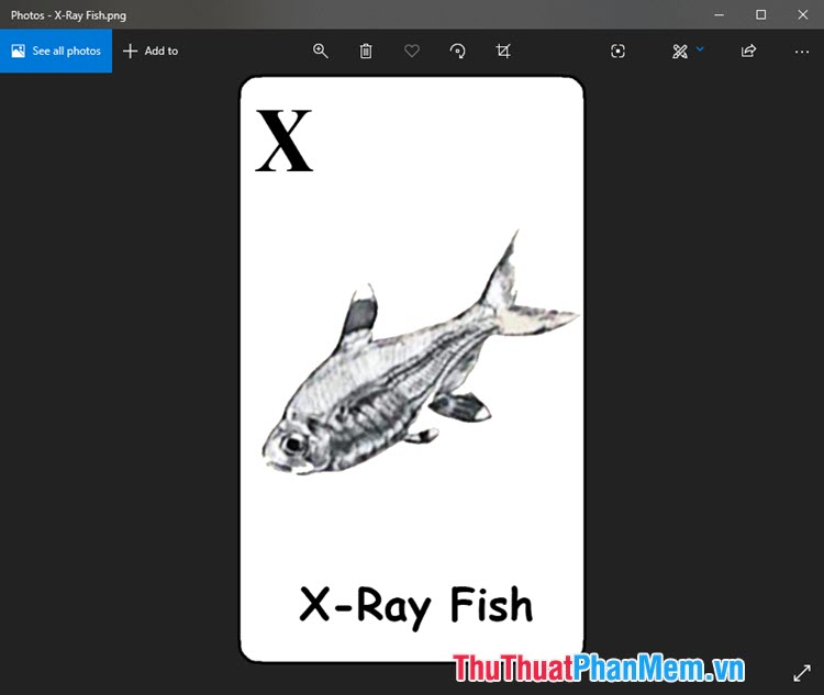 Hình ảnh Animal 4D cá tetra hoàng kim