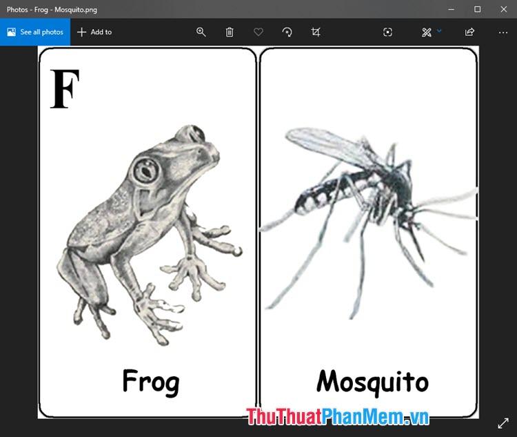 Hình ảnh Animal 4D con ếch bắt muỗi