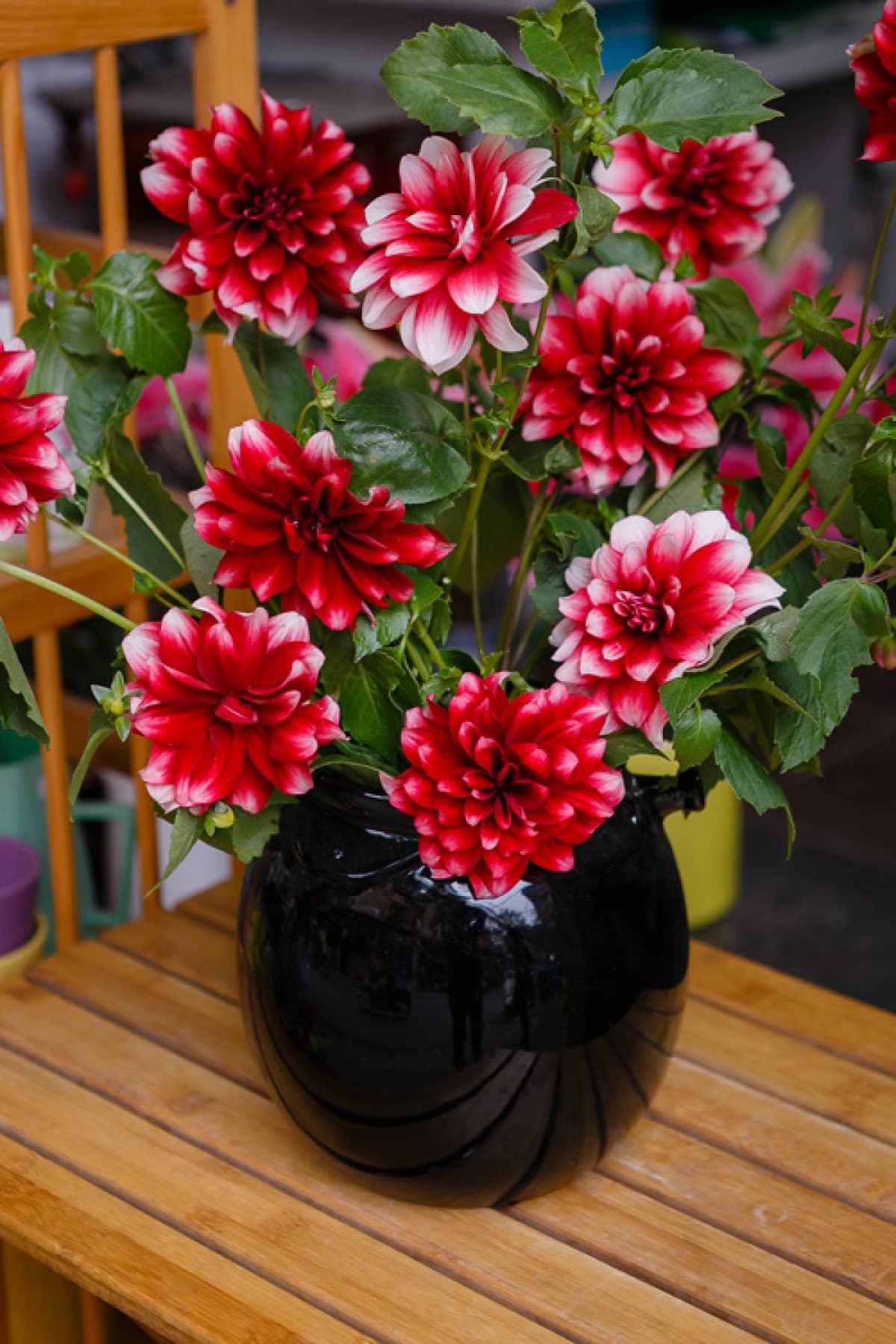 Lọ hoa thược dược đen rất đẹp