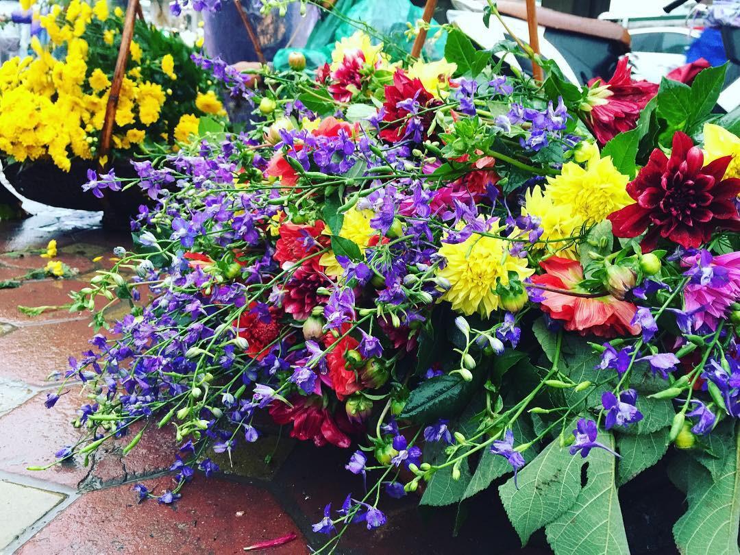 Những bó hoa thược dược rất đẹp