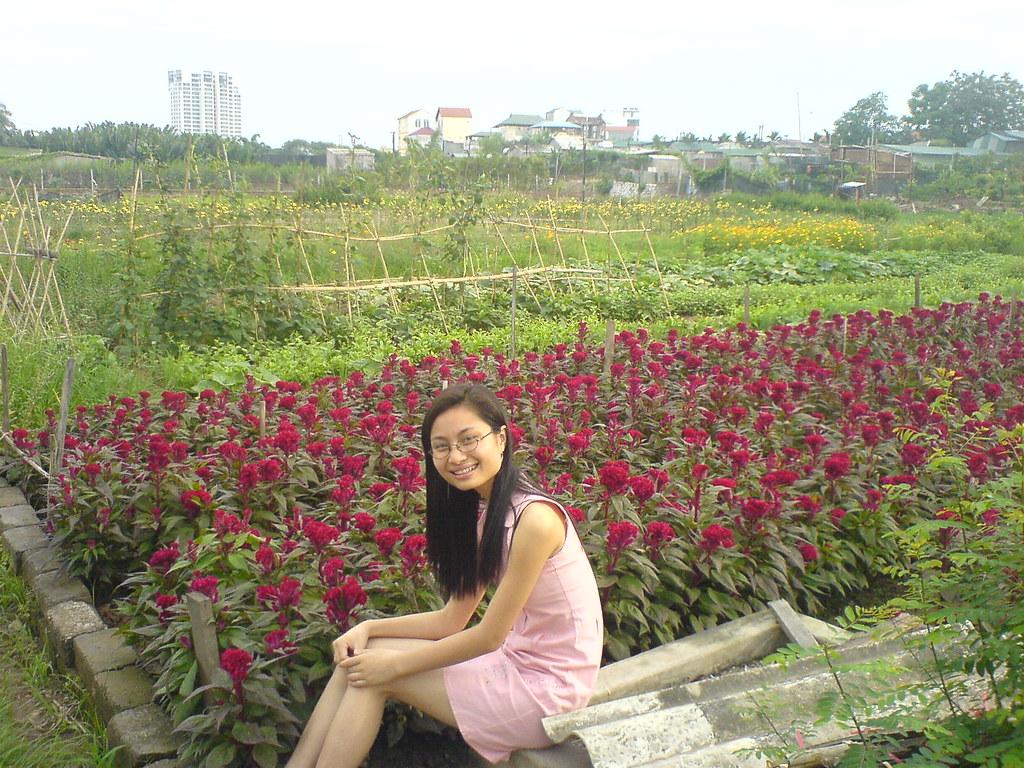 Vườn chồng cây hoa mào gà