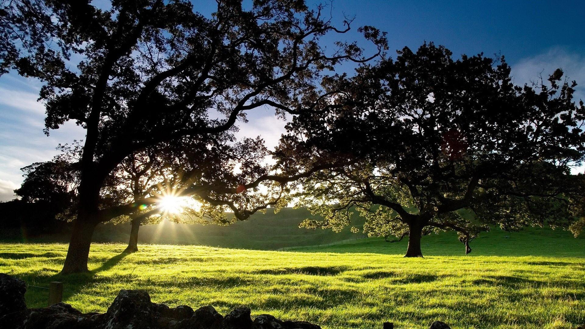 Hình nền phong cảnh bình minh