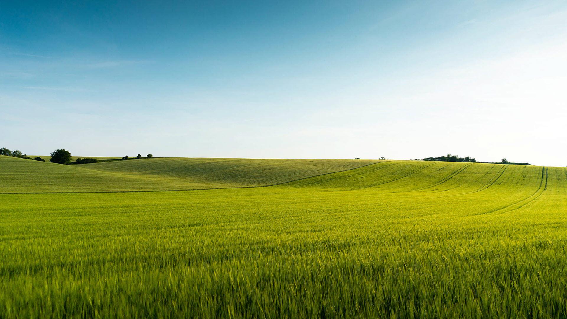 Hình nền phong cảnh cánh đồng