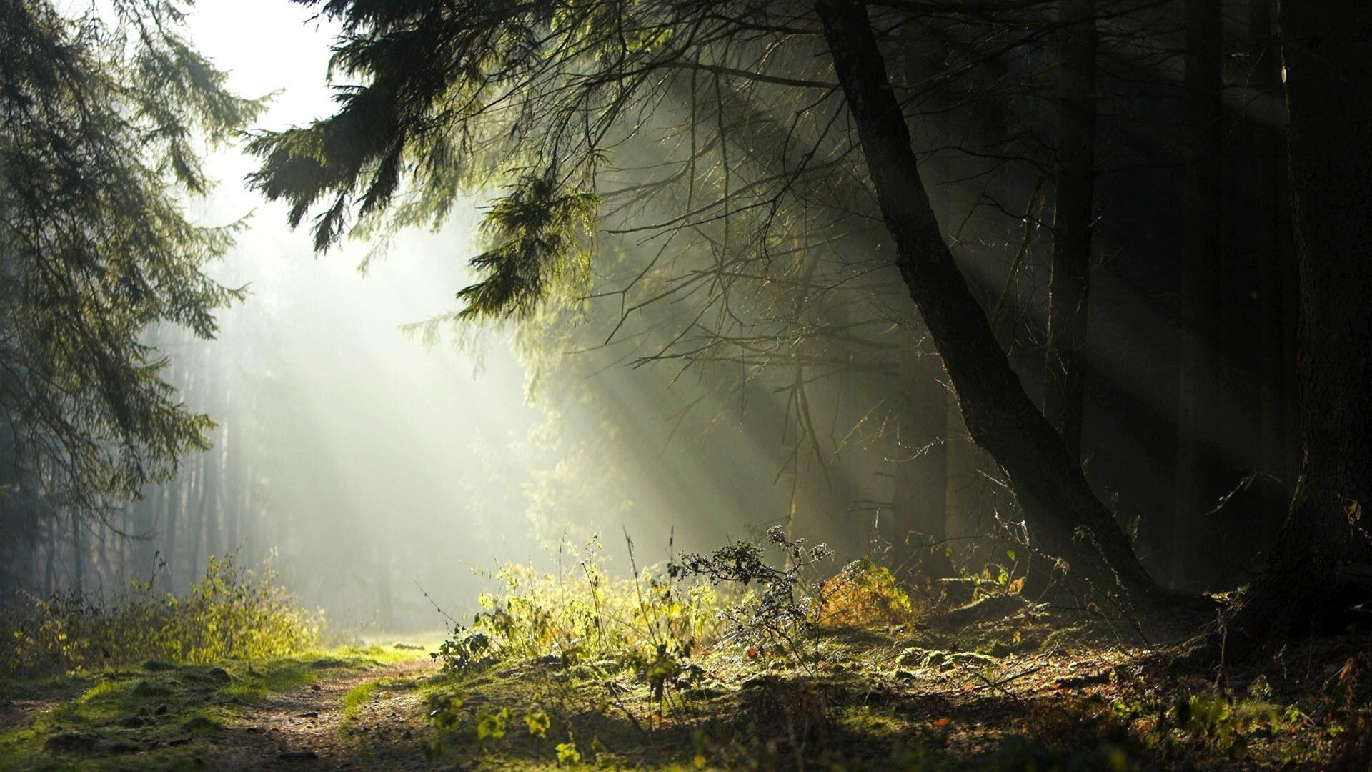 Hình nền phong cảnh hoang sơ