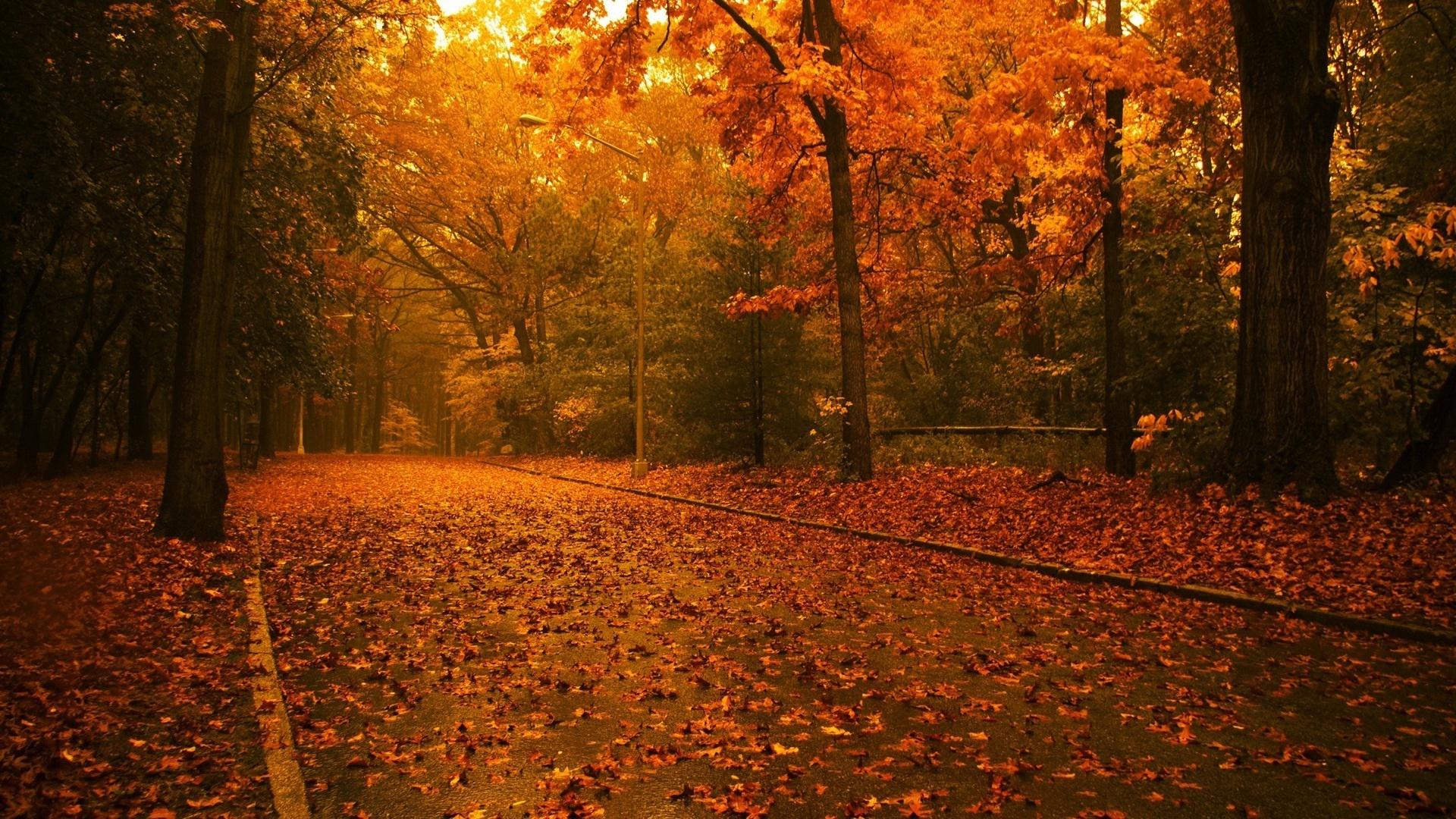 Hình nền phong cảnh mùa thu