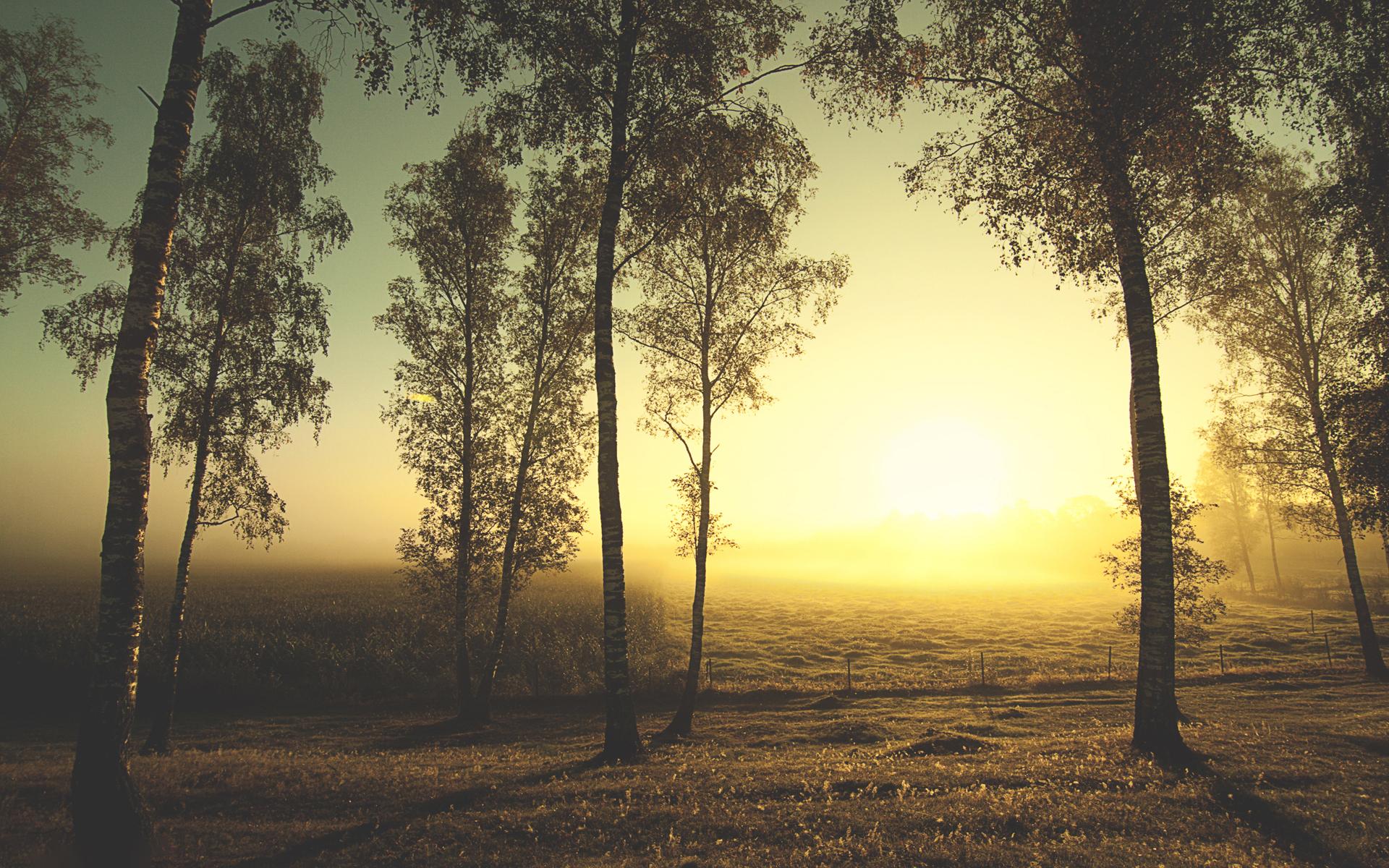 Hình nền phong cảnh nắng chiều