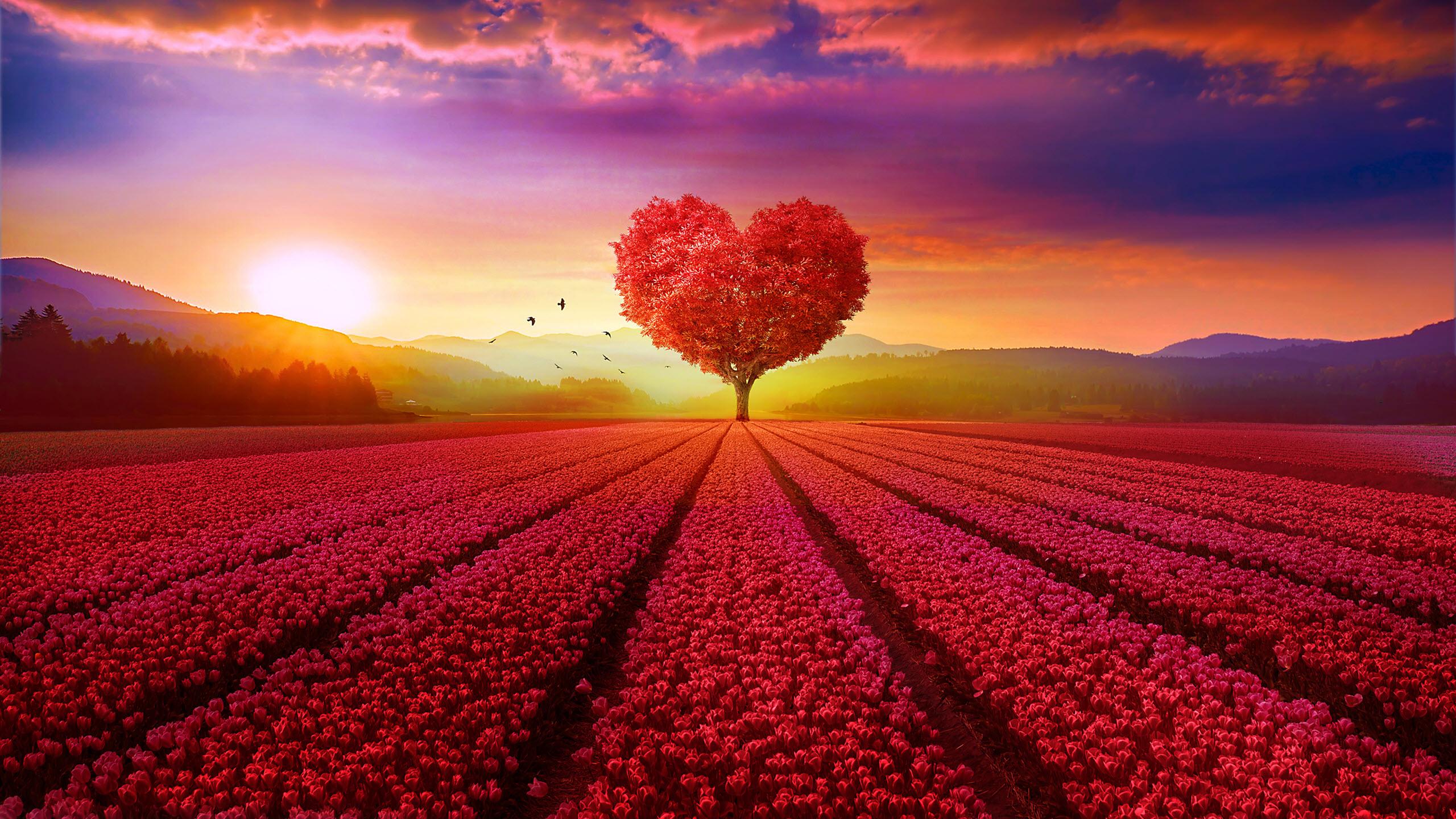 Hình nền phong cảnh tình yêu