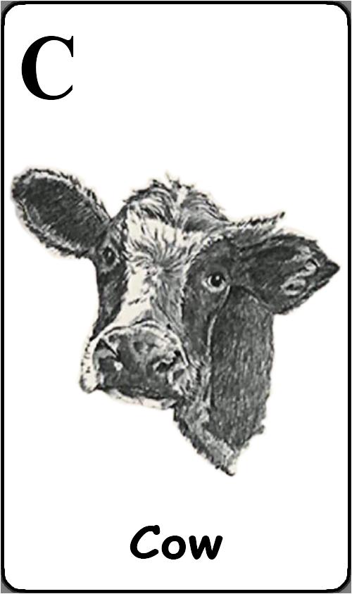 C - Cow