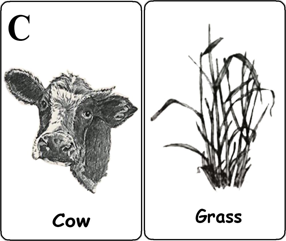 Cow - Grass