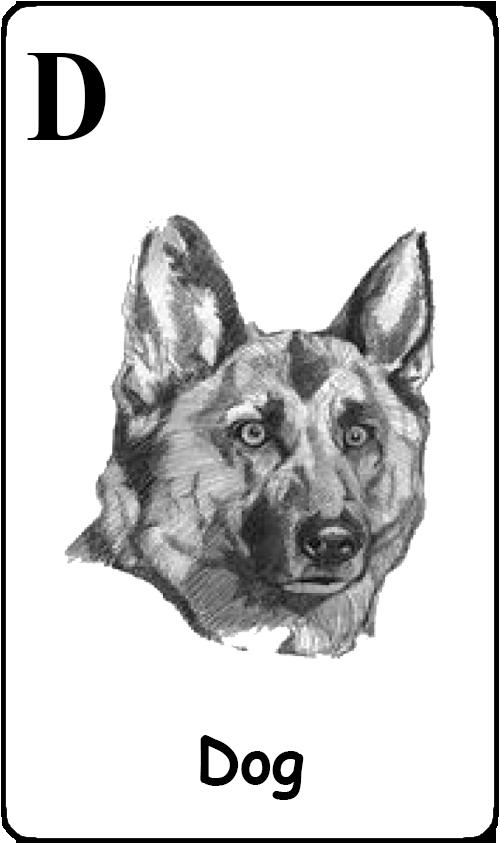 D - Dog