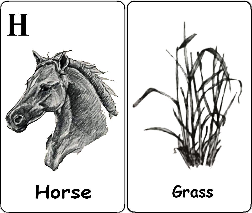 Horse - Grass